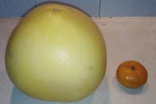 中国の柚子.jpg